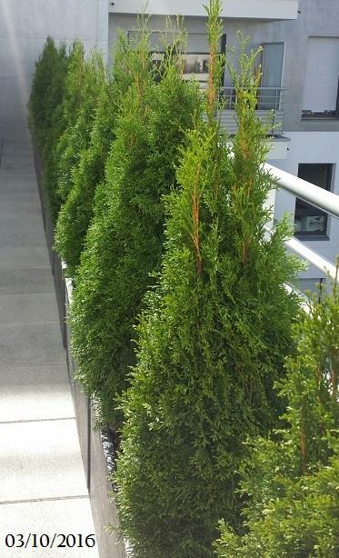 Plantes et arbustes pour haies de tr s bonne qualit for Livraison plantes paris