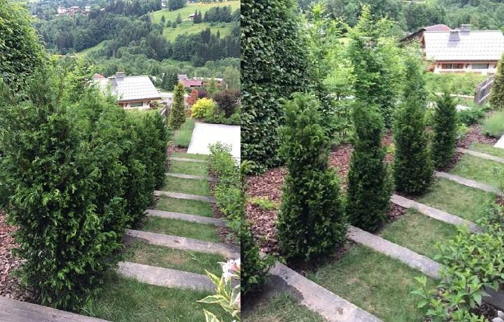 plantes et arbustes pour haies de tr s bonne qualit. Black Bedroom Furniture Sets. Home Design Ideas