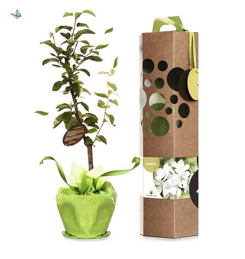 Offrir un arbre un cadeau original symbolique et durable for Offrir un miroir signification