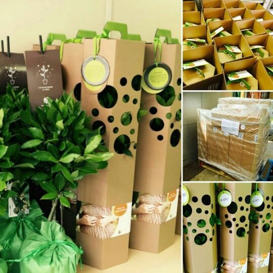 offrir un arbre un cadeau original symbolique et durable pour une occasion sp ciale naissance. Black Bedroom Furniture Sets. Home Design Ideas