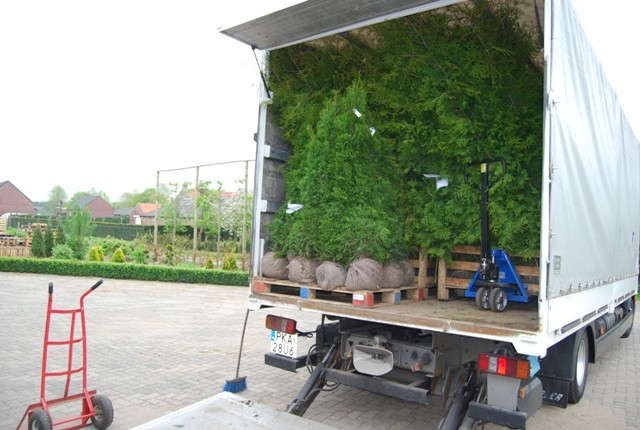 vente prix cypr s de leyland 300 cm plantes de haie en grande taille. Black Bedroom Furniture Sets. Home Design Ideas