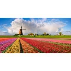 vente en ligne de bulbes fleurs de tr s bonne qualit bulbes de fleurs des pays bas tulipes. Black Bedroom Furniture Sets. Home Design Ideas