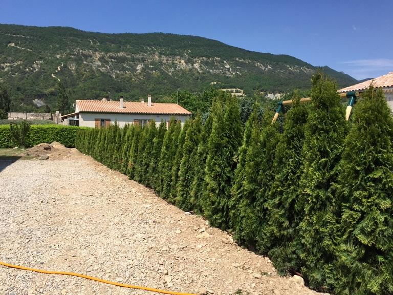 Plantes et arbustes pour haies de tr s bonne qualit for Acheter des plantes par internet
