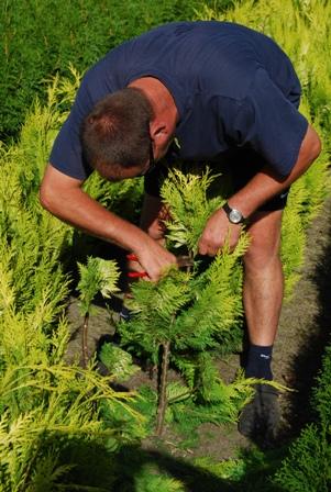 qualité-prix - acheter plantes en ligne